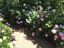 gärten Stockbild
