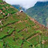 Gärten in den Bergen bei Neu-Guinea Lizenzfreies Stockfoto