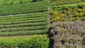 Gärten in der Landschaft stock footage