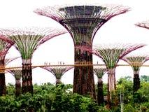 Gärten durch den Schacht, Singapur Stockbilder