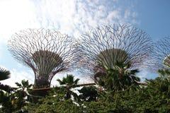 Gärten durch den Schacht in Singapur Stockbild