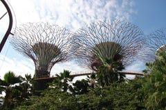 Gärten durch den Schacht in Singapur Lizenzfreie Stockbilder