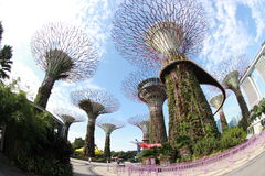 Gärten durch den Schacht in Singapur Lizenzfreie Stockfotografie
