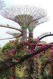 Gärten durch die Bucht - SuperTree Grove Stockfotografie