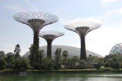 Gärten durch die Bucht und den botanischen Garten in Singapur Stockfotografie