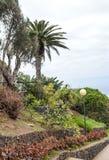 Gärten mit Palmen Stockfoto
