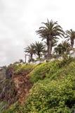 Gärten mit Palmen Lizenzfreie Stockfotos