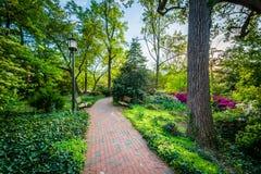 Gärten und Bäume entlang einem Gehweg an Universität John Hopkins, i stockfotografie