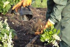 Gärtner stockfoto