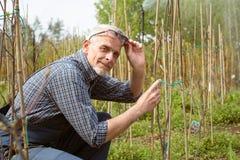 Gärtner behandelt Jungpflanzen Lächeln, entfernt seinen Gläsern lizenzfreie stockbilder