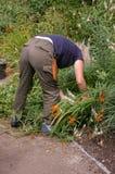 Gärtner bei Arbeit 01 Stockbilder
