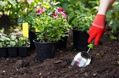Gärtner, der Blumen im Garten, Abschluss herauf Foto pflanzt Stockfotos