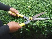Gärtner, der die Büsche durch Gartenarbeitscheren trimmt Stockfotos
