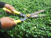 Gärtner, der die Büsche durch Gartenarbeitscheren trimmt Stockfotografie