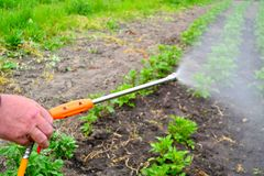 Gärtner, der ein insectecide applaying ist Stockfoto
