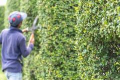 Gärtner, der eine Hecke im Garten schneidet stockfotos