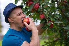 Gärtner, der einen Apfel isst Stockfoto