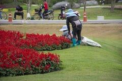 Gärtner, der am Garten in Singha-Park an Chiangrai-Stadt in Chiang Rai, Thailand arbeitet und im Garten arbeitet stockfotos