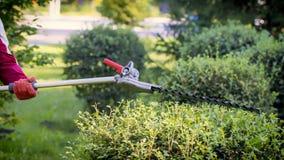 Gärtner, der grünen Busch mit Trimmermaschine trimmt stockfotografie