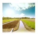 Gärtner, der landwirtschaftliche Düngemittel organisches Gemüse-pict bearbeitet Stockfotos