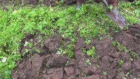 Gärtner, der oben Boden mit grünem Düngemittel gräbt stock footage