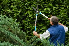 Gärtner des älteren Mannes schnitt eine Hecke Stockbild