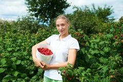 Gärtner des jungen Mädchens in weißer T-Shirt Versammlung eine Erntehimbeere lizenzfreie stockbilder