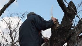 Gärtner hält das Verjüngen von Beschneidung des alten Obstbaumes stock video footage