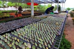 Gärtner ist die Ausbreitung, die im Gewächshaus unter Verwendung des Blattes saftig ist, das in den Kompostmischungsbehälter schn stockfoto