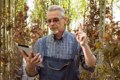 Gärtner mit einem Klemmbrett in seinen Händen Genetisch geänderte Anlagen lizenzfreie stockfotos