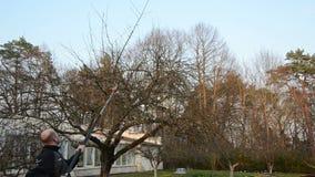 Gärtner sah Apfelbaumast mit speziellem Sägewerkzeug im Garten stock video footage