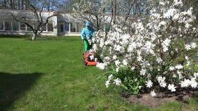 Gärtner schnitt Rasen mit Rasenmäher nahe Frühlingsblüte 4K stock footage