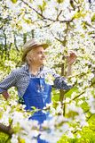 Gärtner-South Tirol-Kirschblume Strohhut Lizenzfreies Stockbild
