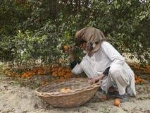 Gärtner und Orangen Stockbild