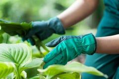 Gärtner während der Arbeit mit Blumen lizenzfreies stockbild