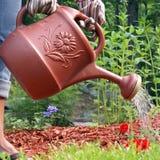 Gärtner wässert Blumen Lizenzfreies Stockfoto