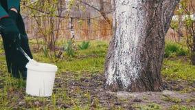 Gärtner Whitewash Tree Trunk mit Kreide im Garten, Baum interessieren sich im Frühjahr stock video footage