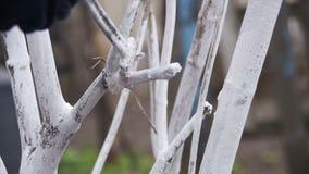 Gärtner Whitewash Tree Trunk mit Kreide im Garten, Baum interessieren sich im Frühjahr Langsame Bewegung stock footage