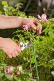 Gärtnerarbeit Stockbilder