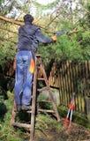 Gärtnerausschnittbaum, Reinigung nach Sturm Lizenzfreies Stockbild