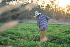 Gärtnergrabung der Boden für die Landwirtschaft am Morgen Lizenzfreie Stockbilder