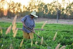 Gärtnergrabung der Boden für die Landwirtschaft am Morgen Stockfotos