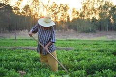 Gärtnergrabung der Boden für die Landwirtschaft am Morgen Lizenzfreie Stockfotos