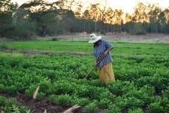 Gärtnergrabung der Boden für die Landwirtschaft am Morgen Lizenzfreies Stockbild