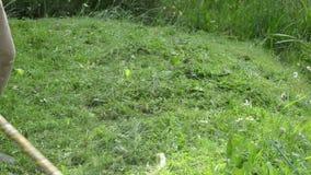 Gärtnermann mit Trimmerschnitt-Grasszene stock footage