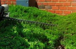 Gärtnerschnitte eine Hecke mit einer Heckenschere lizenzfreies stockbild