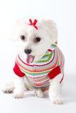 gäspa för hund Fotografering för Bildbyråer