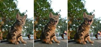 gäspa för katt royaltyfri foto