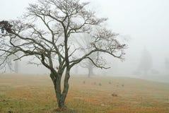 Gäss i dimma Royaltyfri Fotografi
