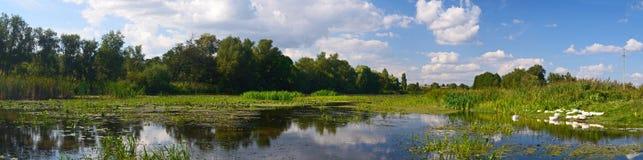 Gäss på floden Royaltyfria Bilder